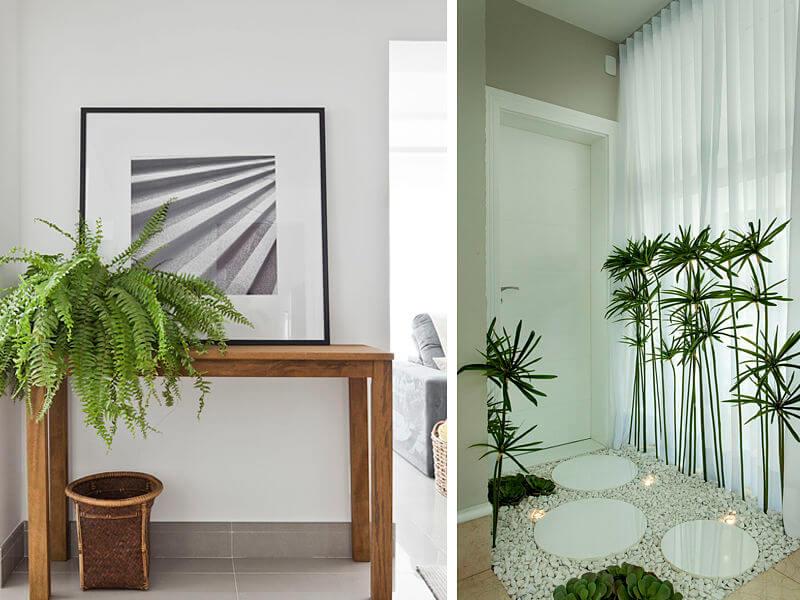 hall de entrada com plantas