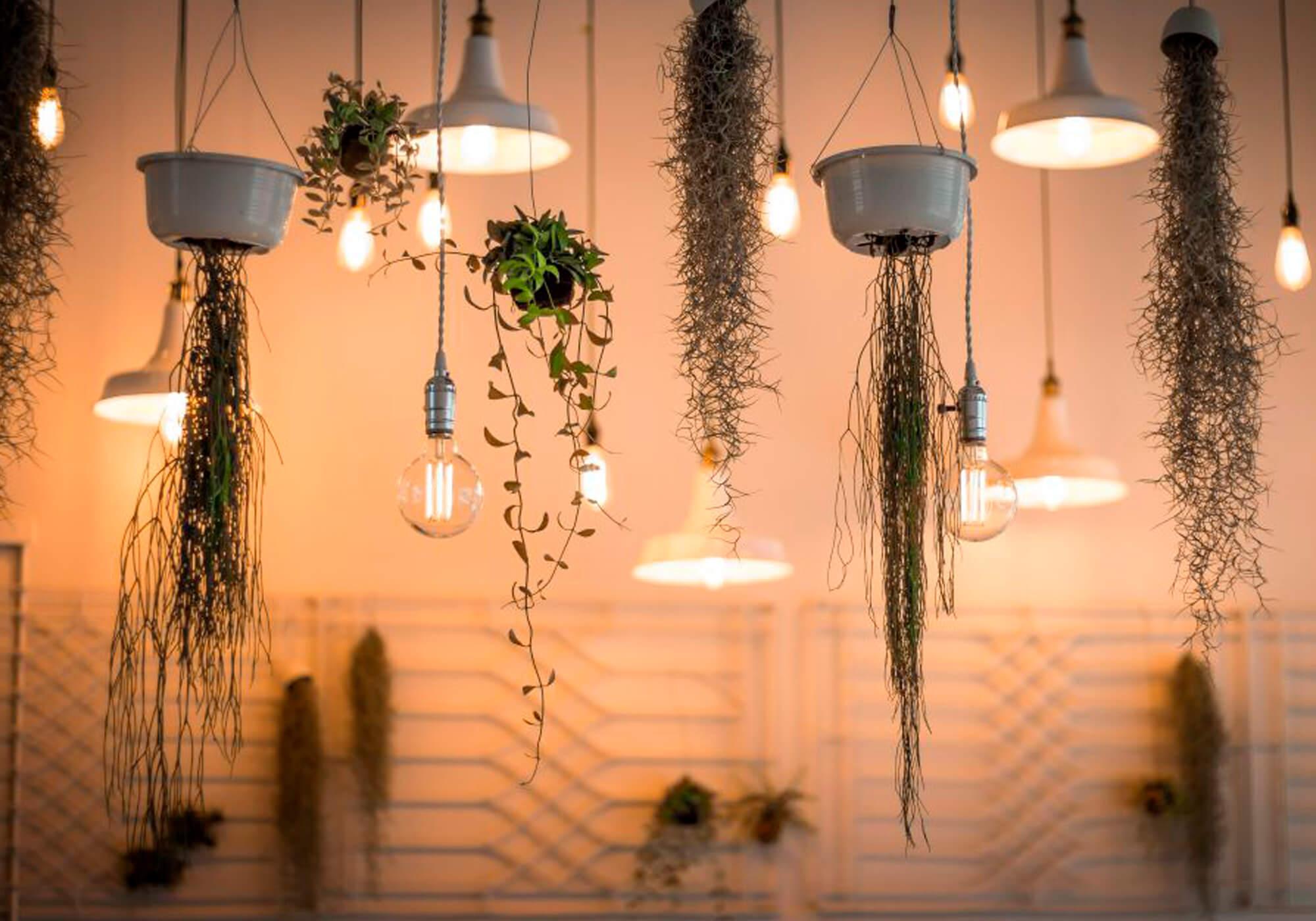 ambiente com diversas lâmpadas led acesas ao lado de plantas penduradas do teto